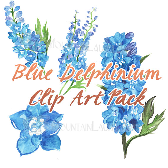 Delphinium clipart #8, Download drawings