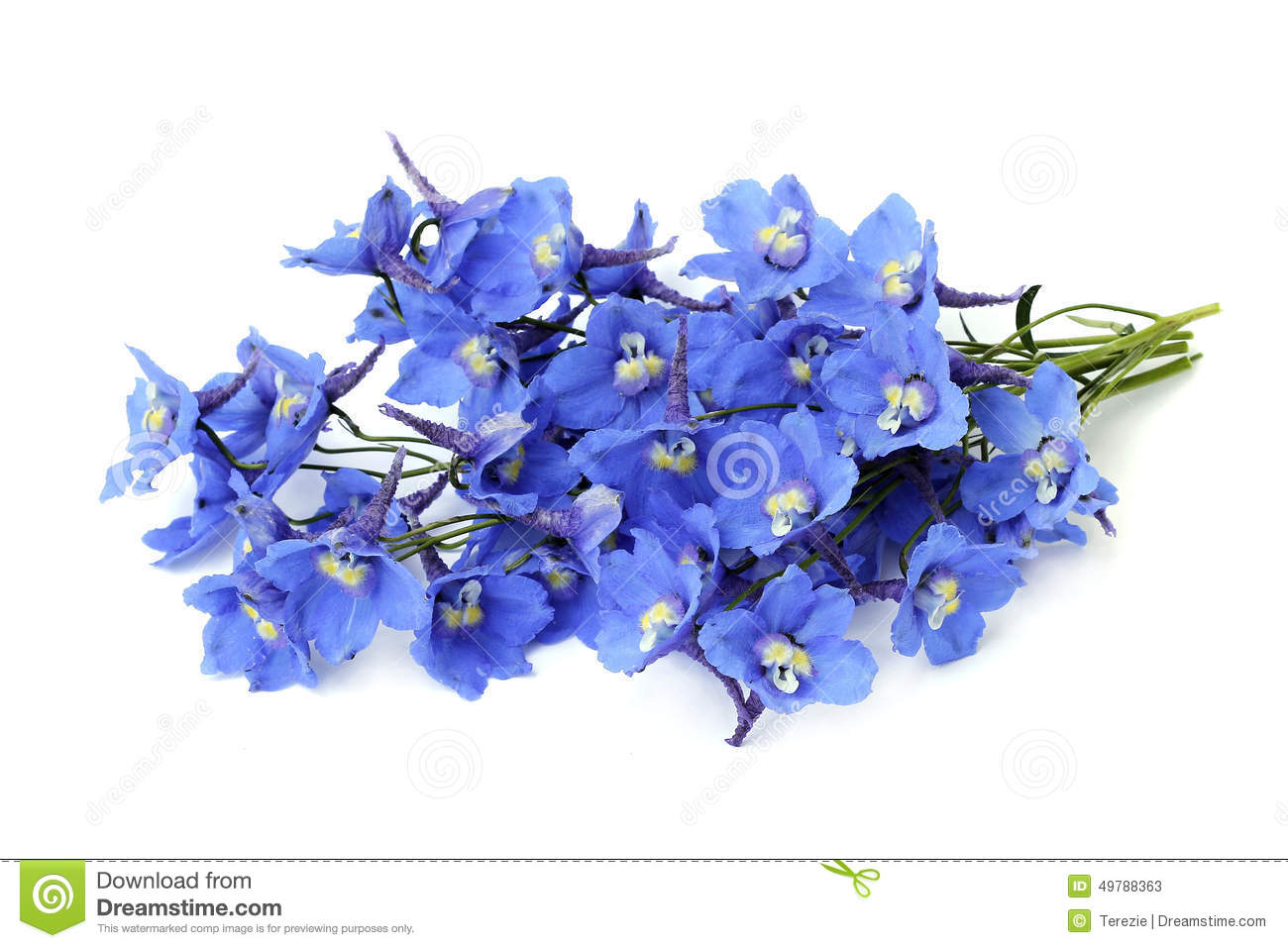 Delphinium clipart #5, Download drawings