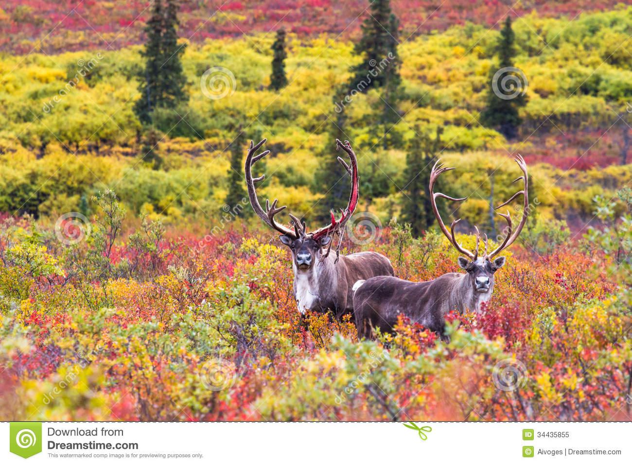 Denali National Park clipart #11, Download drawings