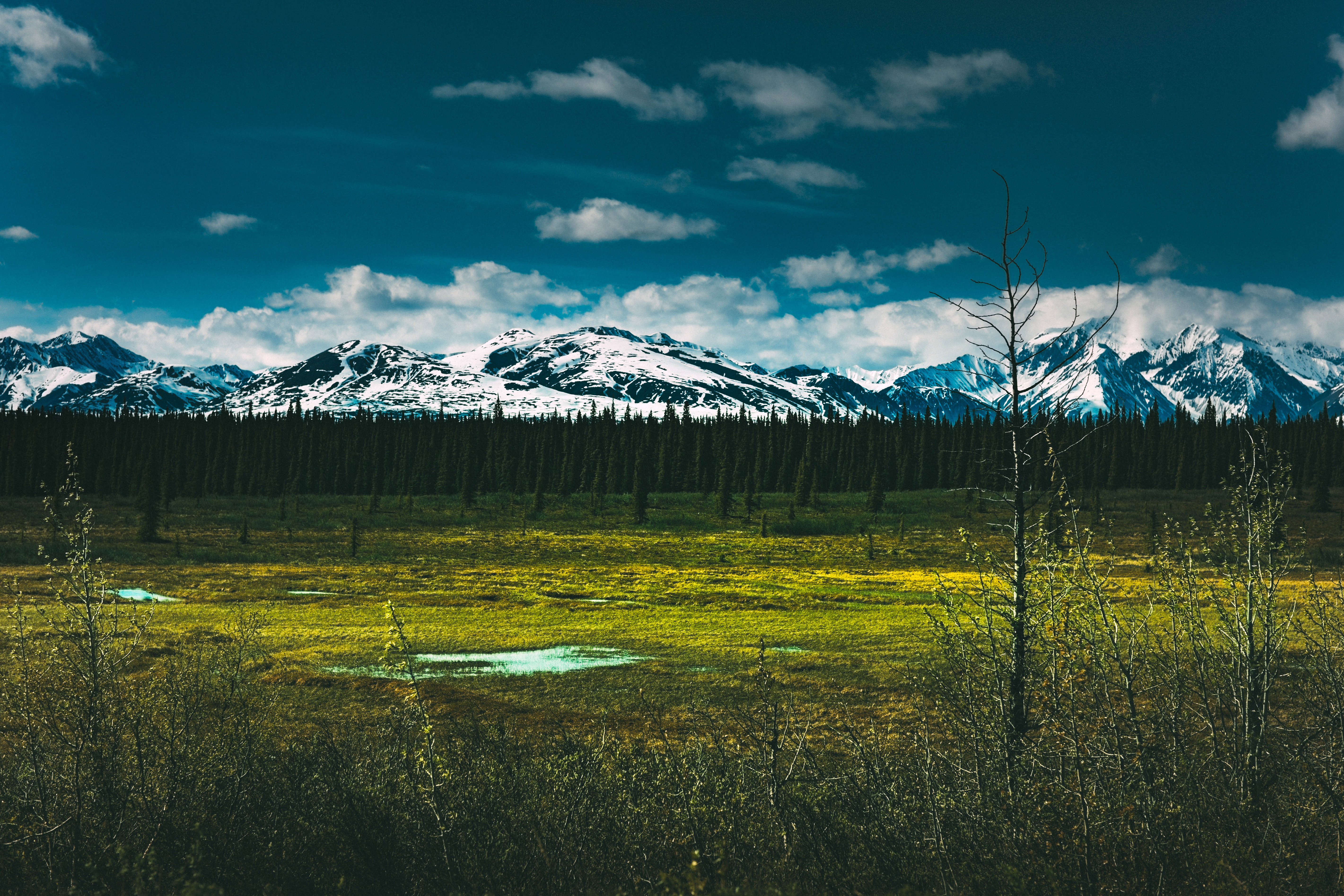 Denali National Park clipart #1, Download drawings