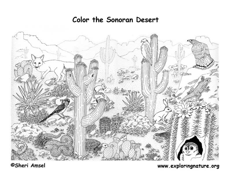 Desert coloring #5, Download drawings