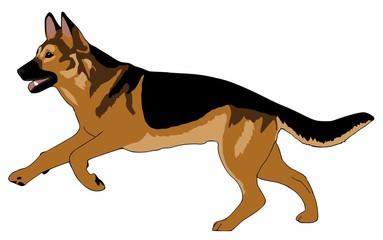 Deutscher Schaeferhund clipart #20, Download drawings