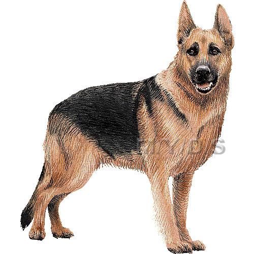Deutscher Schaeferhund clipart #10, Download drawings