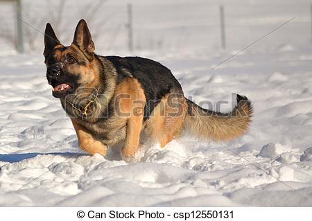 Deutscher Schaeferhund clipart #17, Download drawings