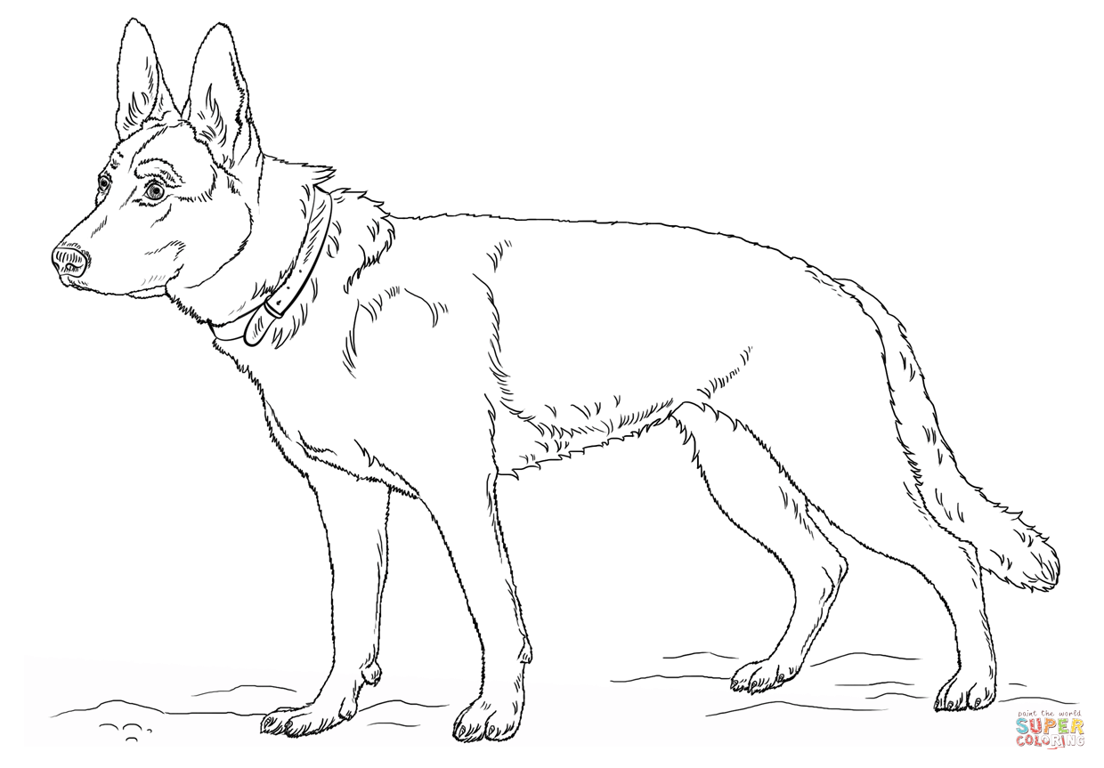 German Shepherd coloring #5, Download drawings