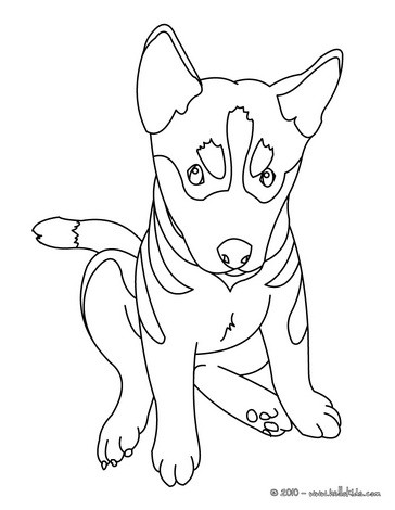 German Shepherd coloring #2, Download drawings