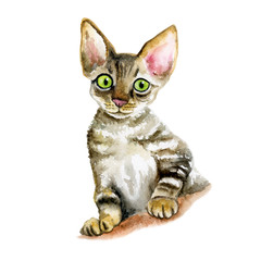 Devon Rex clipart #13, Download drawings