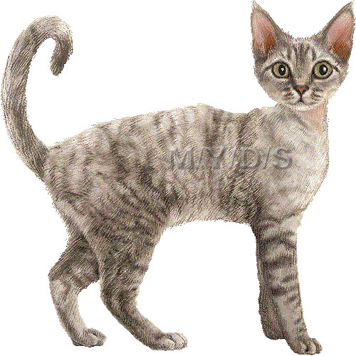 Devon Rex clipart #8, Download drawings