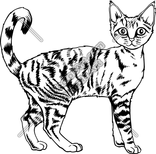 Devon Rex clipart #20, Download drawings