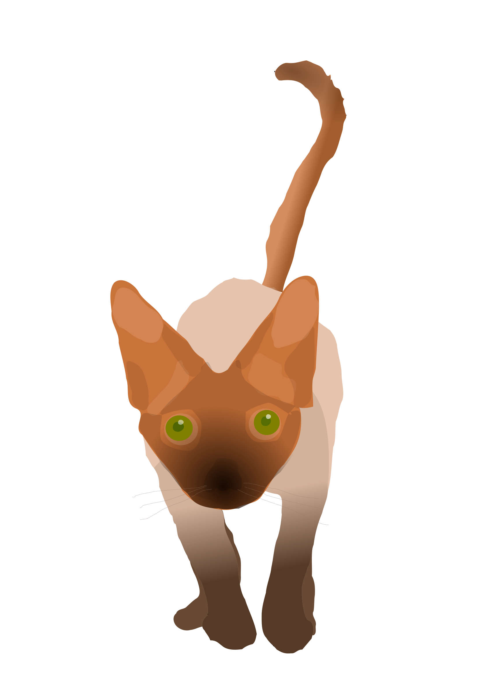 Devon Rex clipart #10, Download drawings