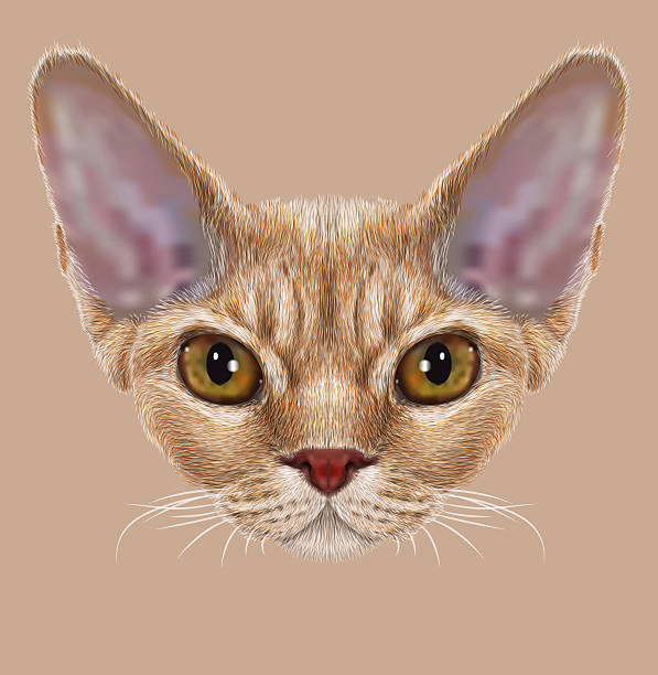 Devon Rex clipart #14, Download drawings