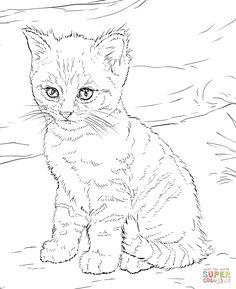 Devon Rex coloring #13, Download drawings
