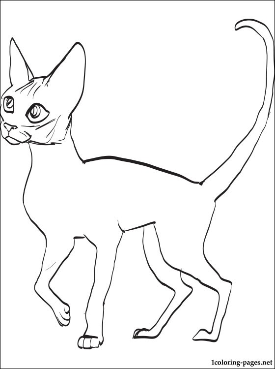 Devon Rex coloring #6, Download drawings