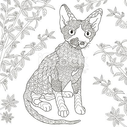 Devon Rex coloring #12, Download drawings