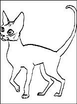 Devon Rex coloring #17, Download drawings