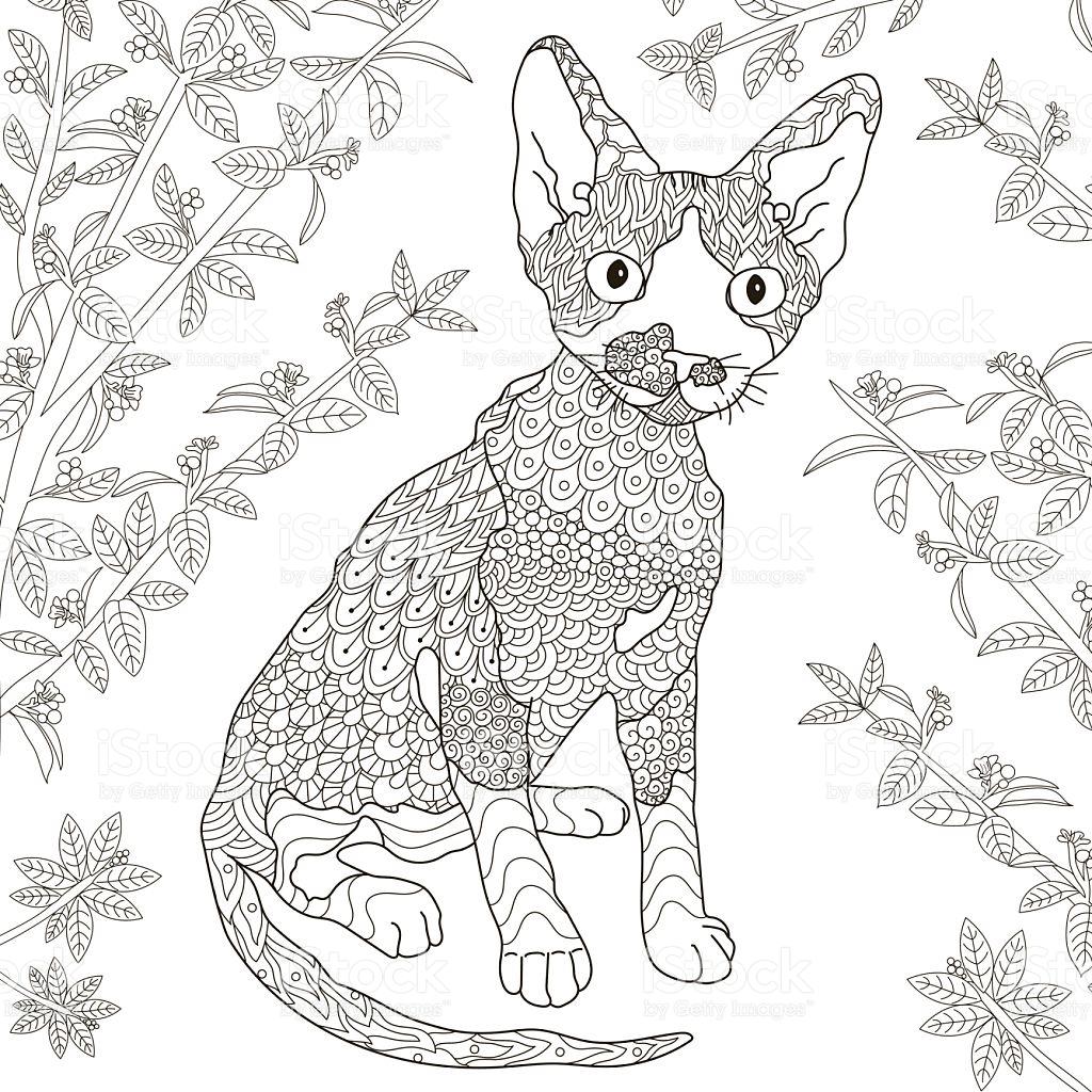 Devon Rex coloring #7, Download drawings