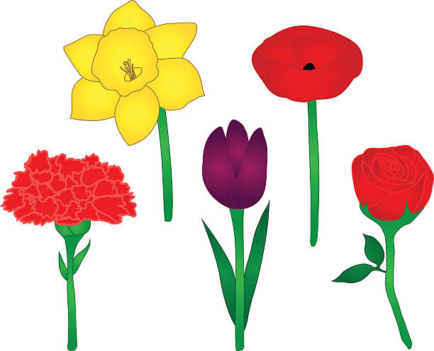 Dianthus clipart #14, Download drawings