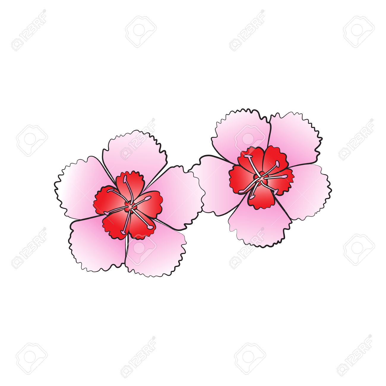 Dianthus clipart #6, Download drawings