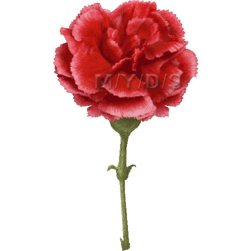 Dianthus clipart #8, Download drawings