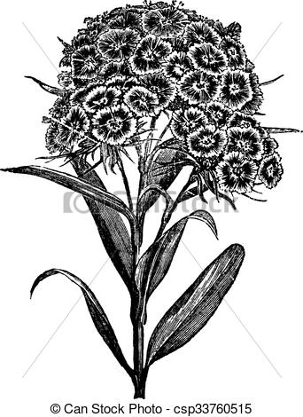 Dianthus clipart #5, Download drawings