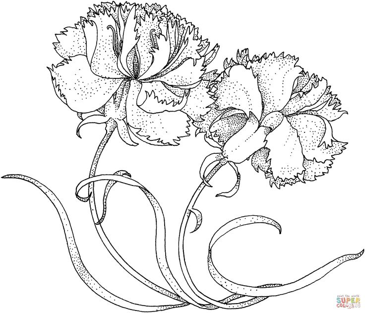 Dianthus coloring #12, Download drawings