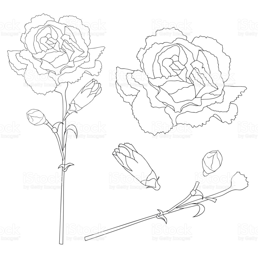 Dianthus coloring #10, Download drawings