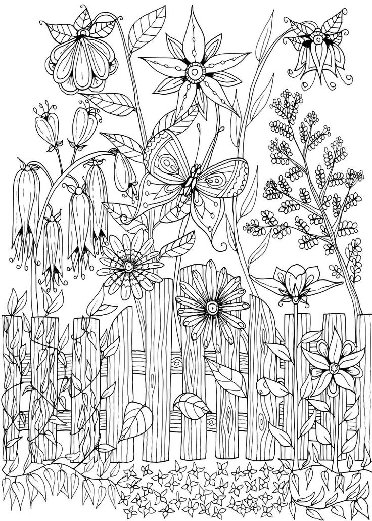 Dianthus coloring #9, Download drawings