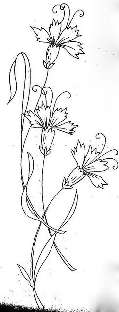 Dianthus coloring #17, Download drawings
