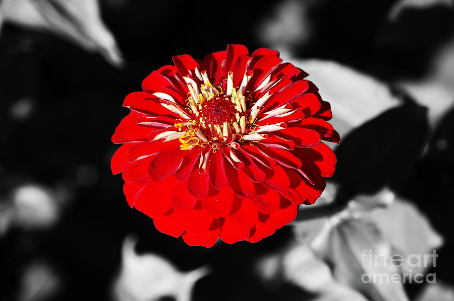 Digital Art Red coloring #8, Download drawings