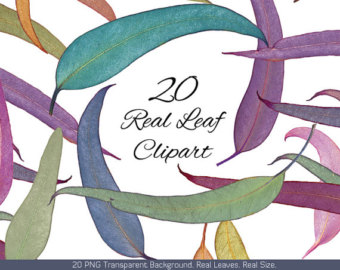 Digital Leave clipart #17, Download drawings
