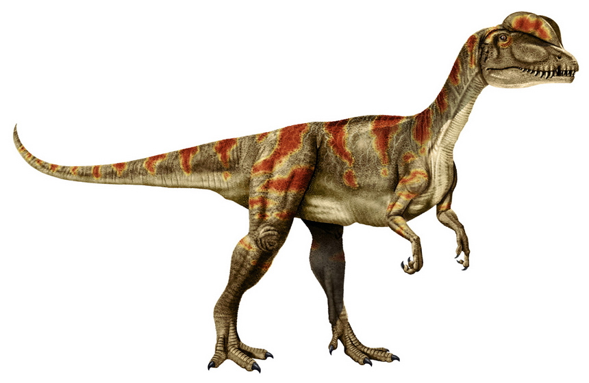 Dilophosaurus clipart #6, Download drawings