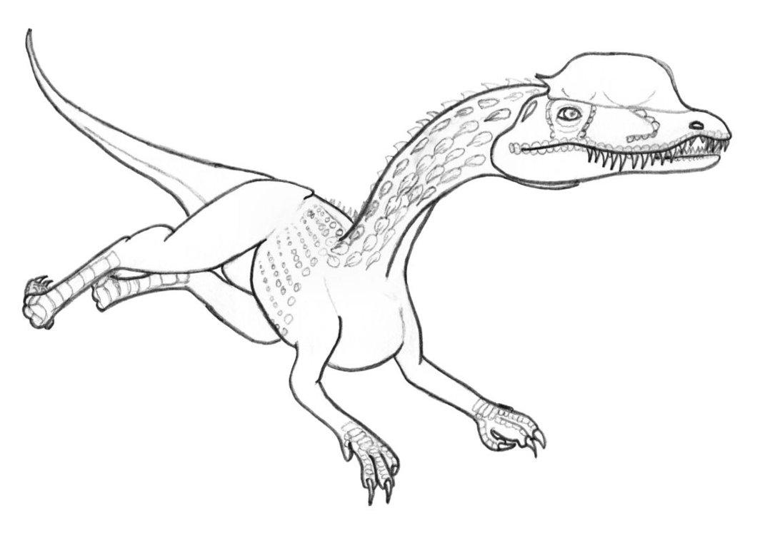 Dilophosaurus coloring #4, Download drawings