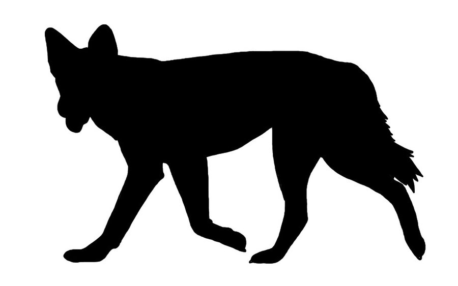 Dingo clipart #7, Download drawings
