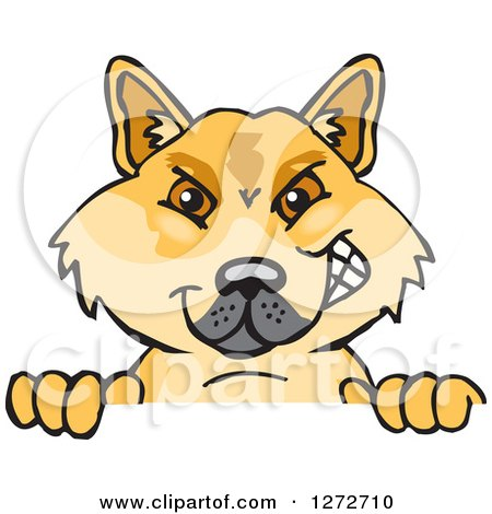 Dingo clipart #8, Download drawings