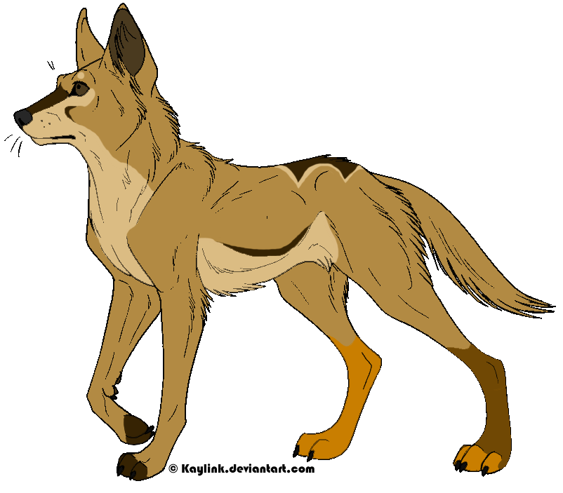 Dingo clipart #16, Download drawings