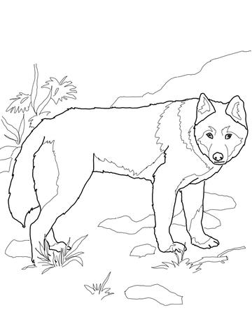 Dingo coloring #17, Download drawings