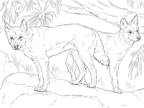 Dingo coloring #15, Download drawings