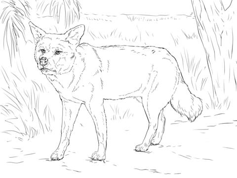 Dingo coloring #16, Download drawings