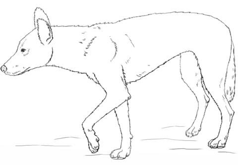 Dingo coloring #5, Download drawings