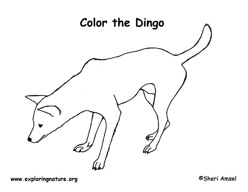 Dingo coloring #1, Download drawings