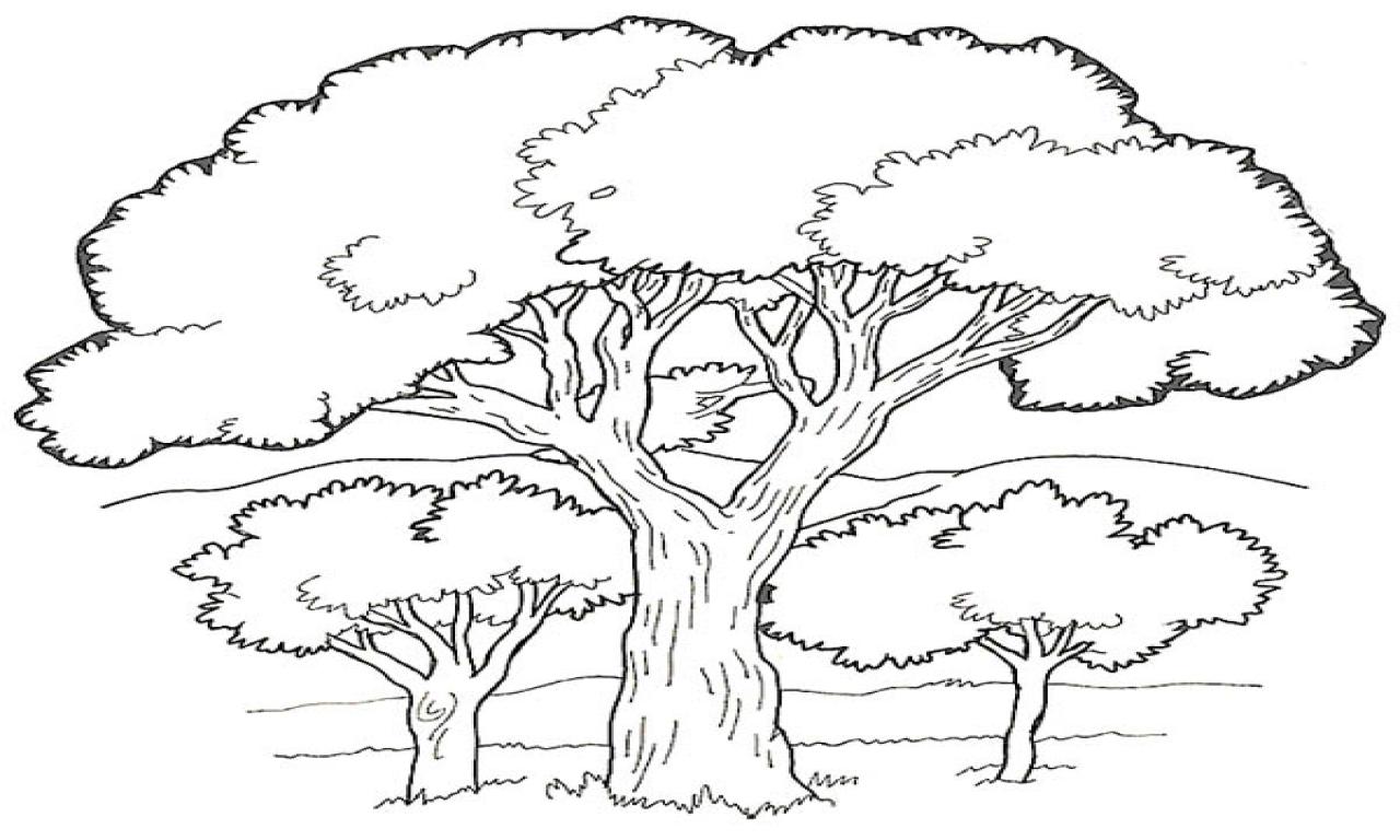 Dirt Road coloring #1, Download drawings
