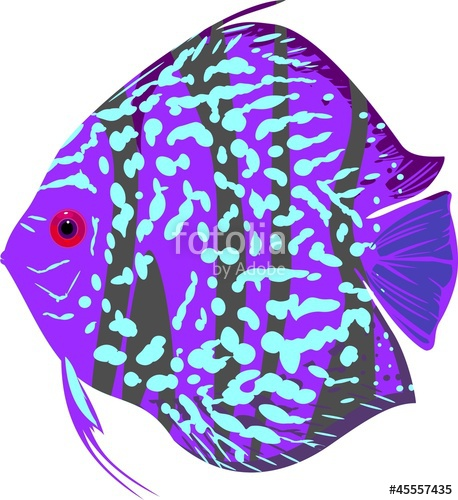 Discus Fish clipart #5, Download drawings