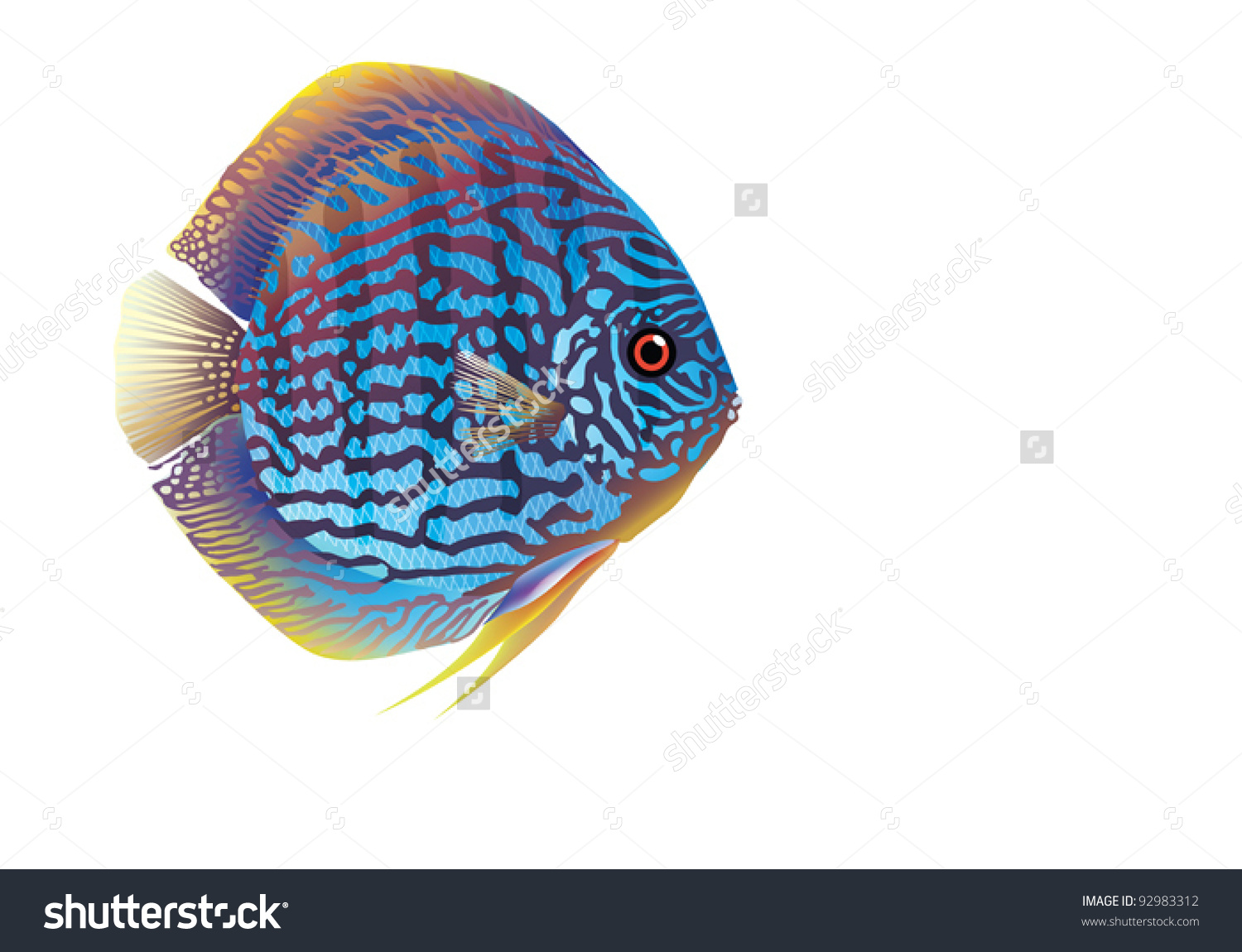 Discus Fish clipart #1, Download drawings