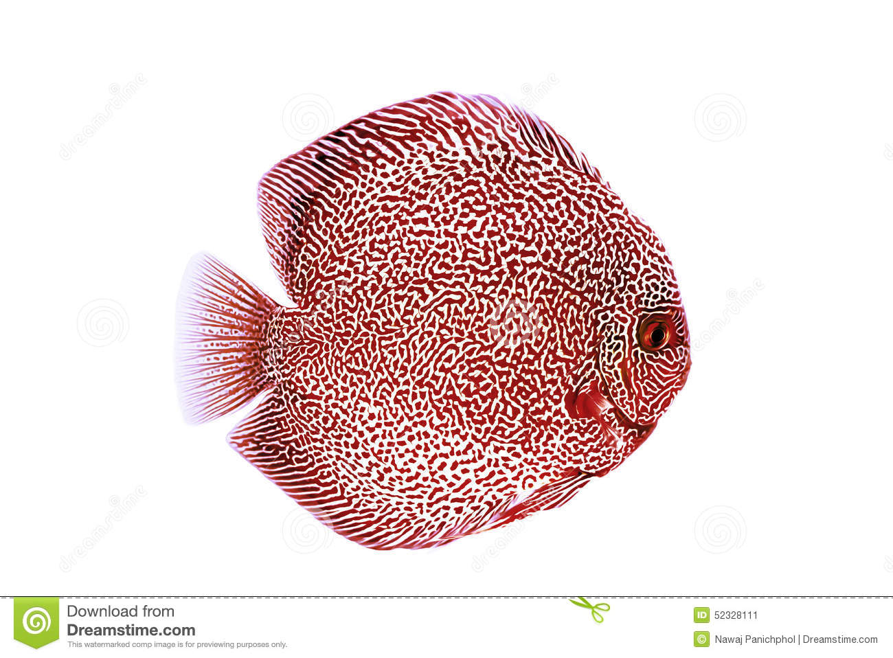 Discus Fish clipart #19, Download drawings