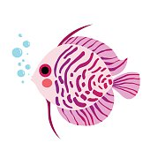 Discus Fish clipart #6, Download drawings