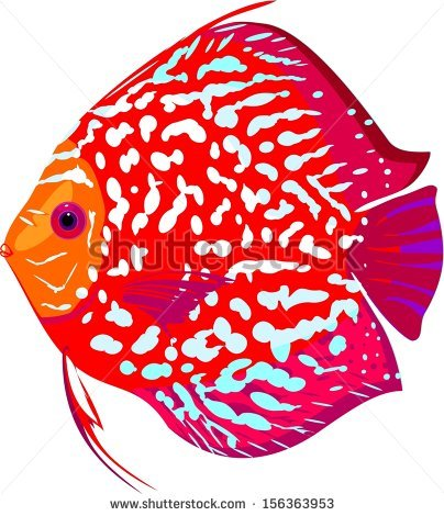 Discus Fish clipart #17, Download drawings