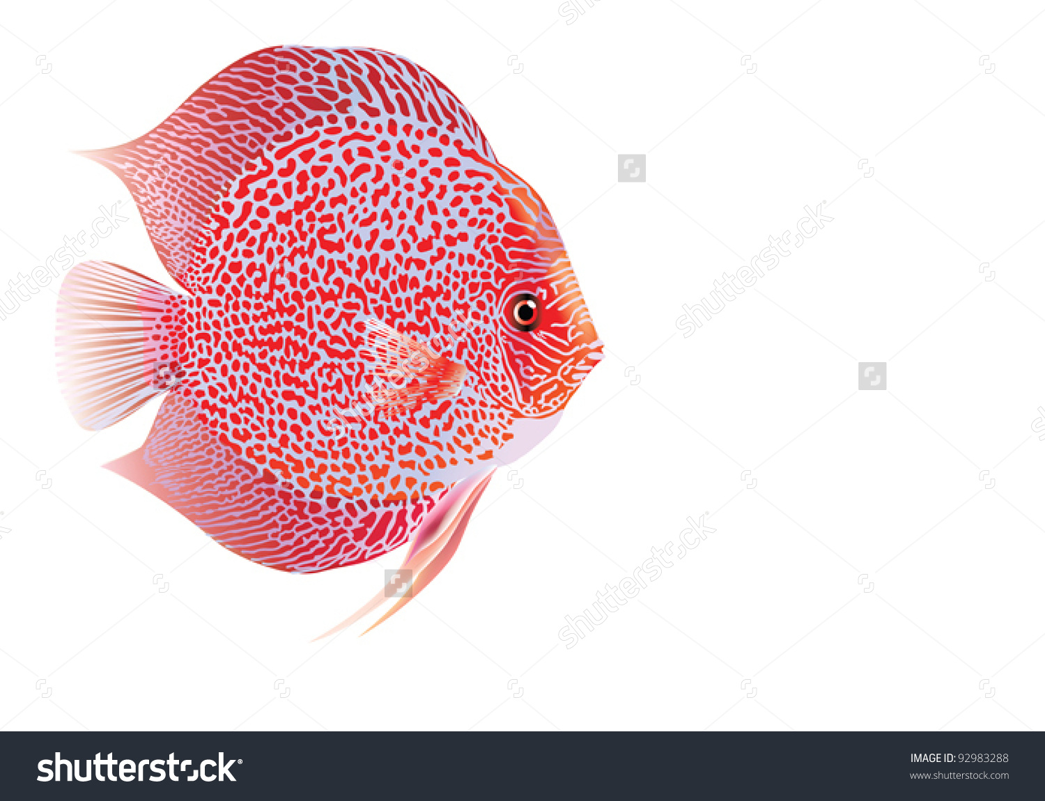 Discus Fish clipart #14, Download drawings