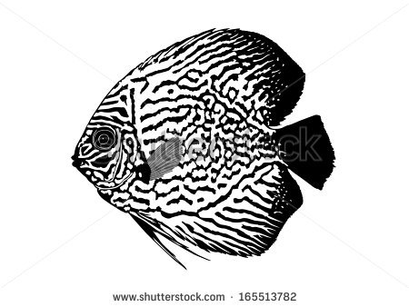 Discus Fish clipart #11, Download drawings
