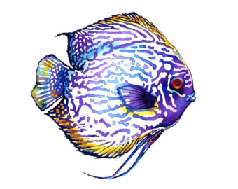 Discus Fish clipart #18, Download drawings