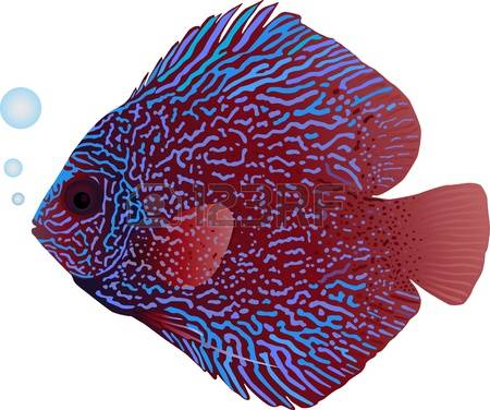 Discus Fish clipart #10, Download drawings